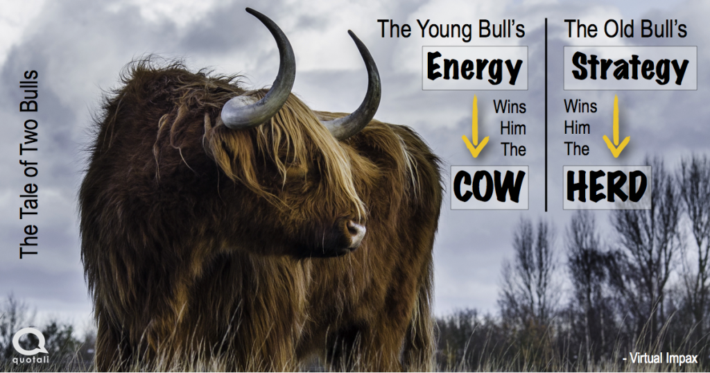 business parable story of two bulls